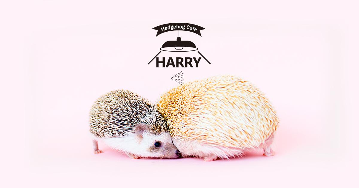 Harry Hedgehog Cafe Roppongi Harakuku Yokohama